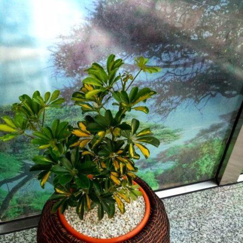 Round Sythentic Rattan Planter